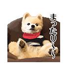 犬の俊介くん(個別スタンプ:37)