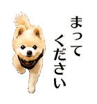 犬の俊介くん(個別スタンプ:38)