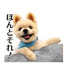犬の俊介くん(個別スタンプ:40)