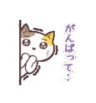 応援する猫、がんばる猫(個別スタンプ:08)
