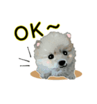 OK&NO版・イラストっぽい子犬2(個別スタンプ:01)