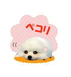OK&NO版・イラストっぽい子犬2(個別スタンプ:03)