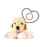 OK&NO版・イラストっぽい子犬2(個別スタンプ:04)