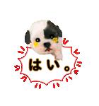 OK&NO版・イラストっぽい子犬2(個別スタンプ:09)
