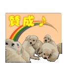 OK&NO版・イラストっぽい子犬2(個別スタンプ:12)