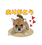 OK&NO版・イラストっぽい子犬2(個別スタンプ:14)