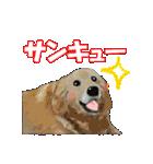 OK&NO版・イラストっぽい子犬2(個別スタンプ:15)