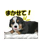 OK&NO版・イラストっぽい子犬2(個別スタンプ:17)