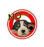 OK&NO版・イラストっぽい子犬2(個別スタンプ:21)