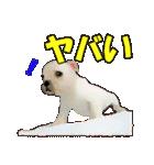 OK&NO版・イラストっぽい子犬2(個別スタンプ:32)