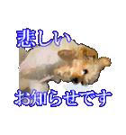 OK&NO版・イラストっぽい子犬2(個別スタンプ:38)