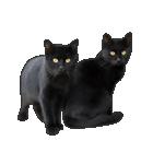 いろんな黒猫♪