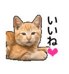 いろんな茶トラ猫♪(個別スタンプ:3)