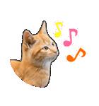 いろんな茶トラ猫♪(個別スタンプ:5)