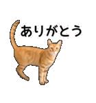いろんな茶トラ猫♪(個別スタンプ:6)