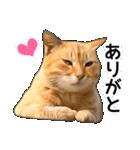 いろんな茶トラ猫♪(個別スタンプ:8)