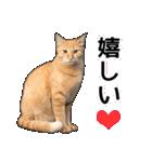いろんな茶トラ猫♪(個別スタンプ:9)