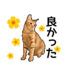 いろんな茶トラ猫♪(個別スタンプ:10)