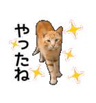 いろんな茶トラ猫♪(個別スタンプ:11)