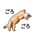 いろんな茶トラ猫♪(個別スタンプ:12)