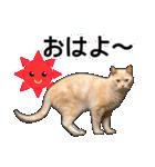 いろんな茶トラ猫♪(個別スタンプ:14)