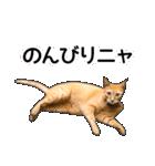 いろんな茶トラ猫♪(個別スタンプ:17)