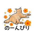 いろんな茶トラ猫♪(個別スタンプ:18)