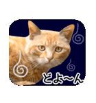 いろんな茶トラ猫♪(個別スタンプ:22)
