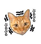 いろんな茶トラ猫♪(個別スタンプ:23)