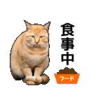 いろんな茶トラ猫♪(個別スタンプ:25)