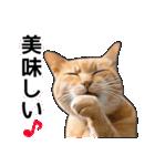 いろんな茶トラ猫♪(個別スタンプ:26)