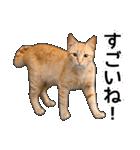 いろんな茶トラ猫♪(個別スタンプ:27)