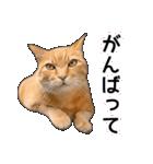 いろんな茶トラ猫♪(個別スタンプ:30)