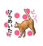 いろんな茶トラ猫♪(個別スタンプ:31)