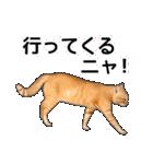 いろんな茶トラ猫♪(個別スタンプ:32)