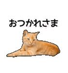 いろんな茶トラ猫♪(個別スタンプ:33)