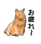 いろんな茶トラ猫♪(個別スタンプ:34)
