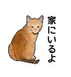 いろんな茶トラ猫♪(個別スタンプ:36)