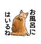 いろんな茶トラ猫♪(個別スタンプ:37)