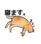 いろんな茶トラ猫♪(個別スタンプ:38)