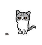 Little cotton candy cat(個別スタンプ:01)