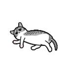 Little cotton candy cat(個別スタンプ:02)