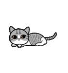 Little cotton candy cat(個別スタンプ:08)
