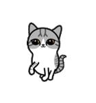 Little cotton candy cat(個別スタンプ:11)