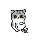 Little cotton candy cat(個別スタンプ:14)