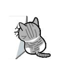 Little cotton candy cat(個別スタンプ:15)