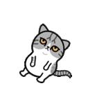 Little cotton candy cat(個別スタンプ:19)