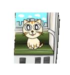 家族に優しいゆかいな猫メイちゃん2(個別スタンプ:19)