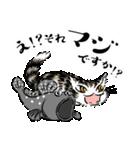猫のダヤン メッセージスタンプ(個別スタンプ:16)
