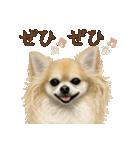 いいね~!チワワ(敬語編)(個別スタンプ:05)